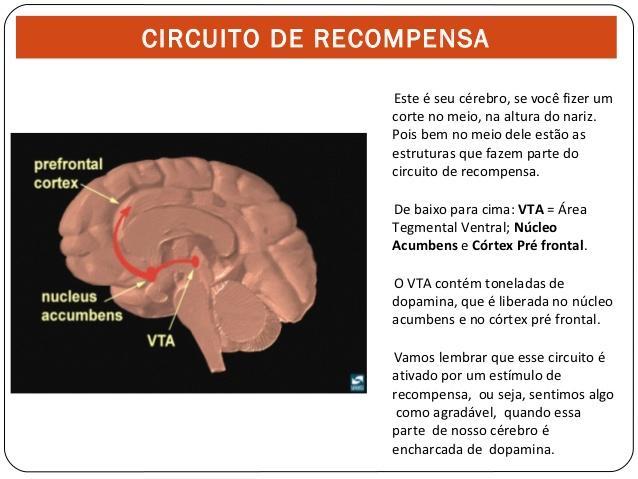 O Sistema de Recompensa Cerebral e Suas Finanças UM CHAMADO A REFLEXÃO